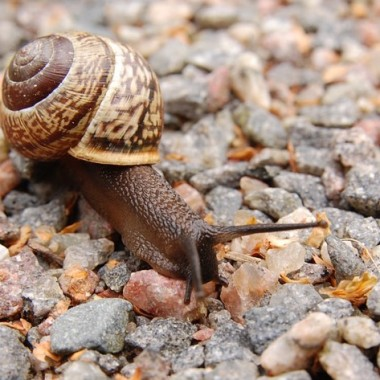 Image showing a snail